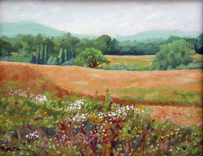 Birchrunville Wildflowers